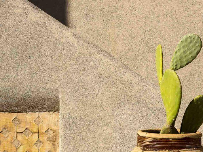 Fotografia di design con una pala di fichidindia in primo piano