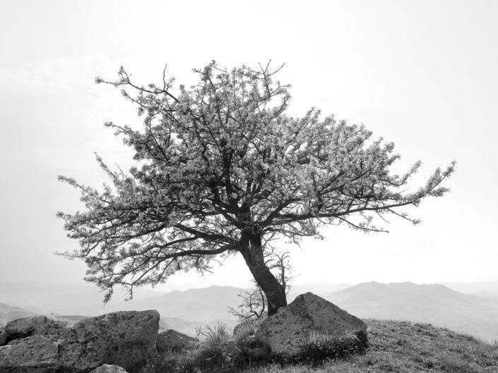 fotografia fine art per arredare stampata su tela Albero in bianco e nero