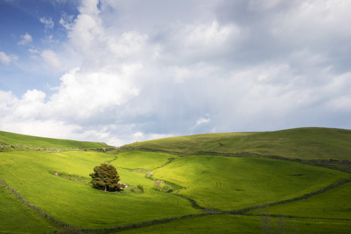 fotografia fine art per arredare stampata su tela canvas foto di un prato verde in collina con un albero illuminato dal sole