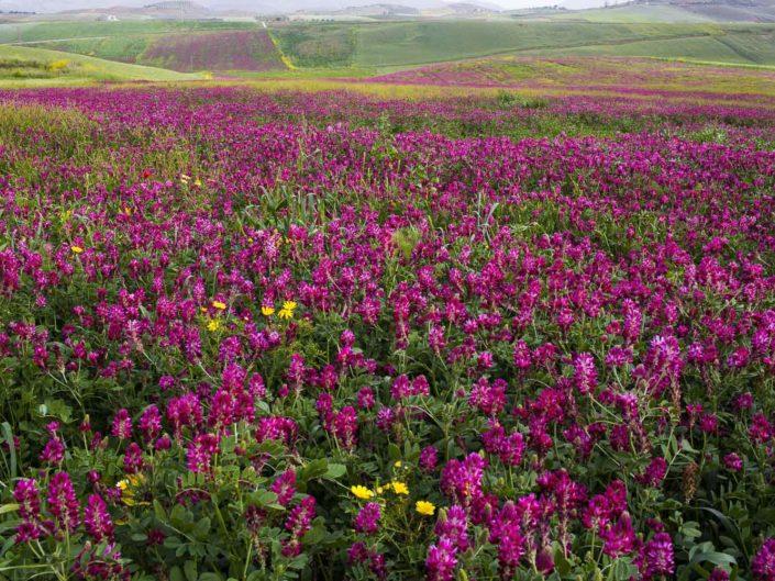fotografia fine art per arredare stampata su tela Campi a colori con fiori viola