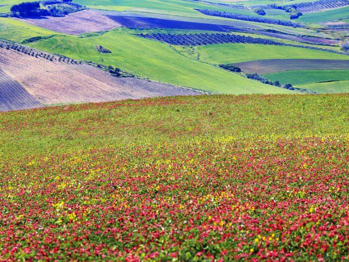 fotografia fine art per arredare stampata su tela colline con campi colorati